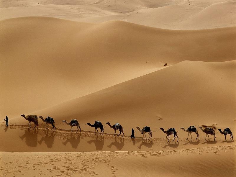 Kamelen in het Midden-Oosten